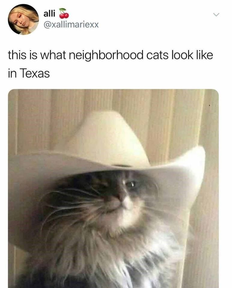 Our Best Of 2018 List Continues With 50 Of The Most Liked Cat Memes This Year