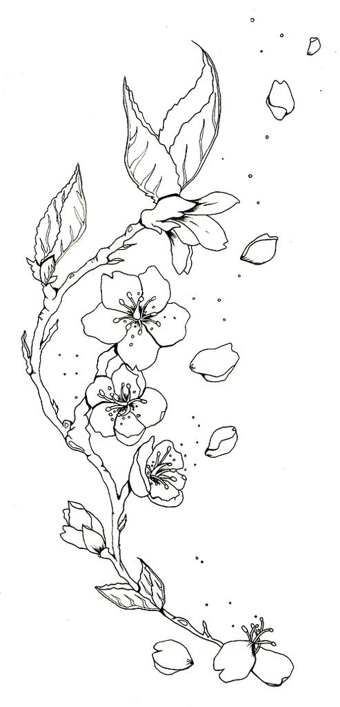 Blossom Flower Line Drawing : Cherry blossom sketch tattoos tattoo b w