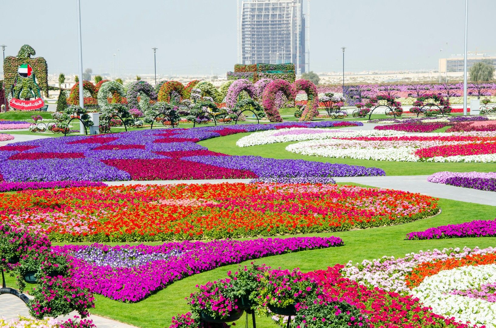 Dubai Miracle Garden, Dubai Now The U201cworldu0027s Biggest Natural Flower Garden,u201d  This 72,000 Sq. Foot Garden Contains Over 45 Million Flowers, And Is  Maintained ...