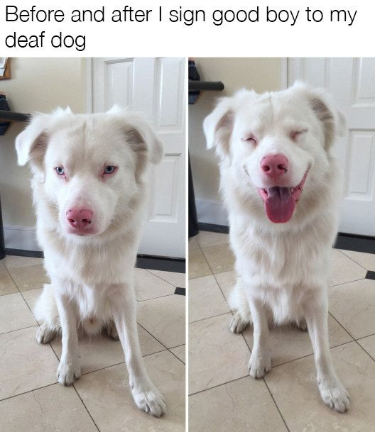 The 100 Best Dog Memes Ever Funny Animals Cute Dogs Funny Animal Pictures