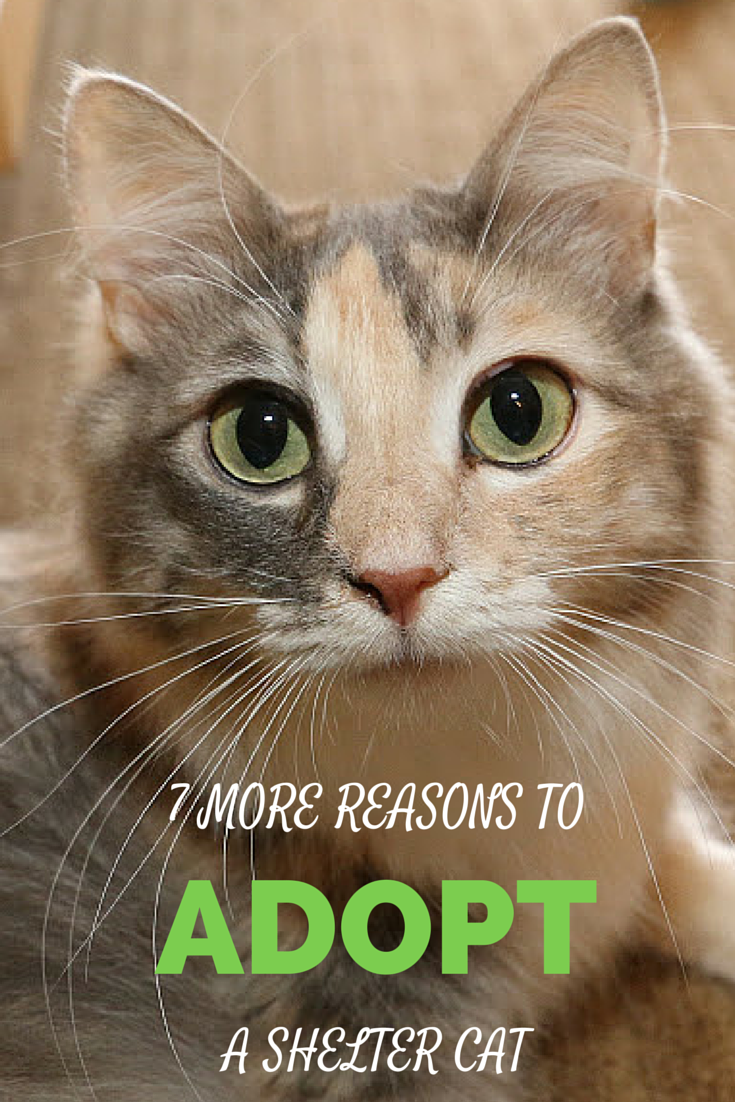 7 More Reasons to Adopt a Shelter Cat Cats, Cat facts