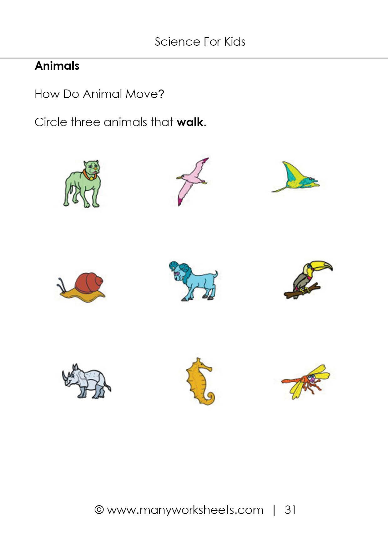 Science Worksheet Preschool For Free Download Science