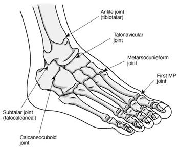 ankle bones diagram Ankle Bones Diagram | closets | Pinterest ...
