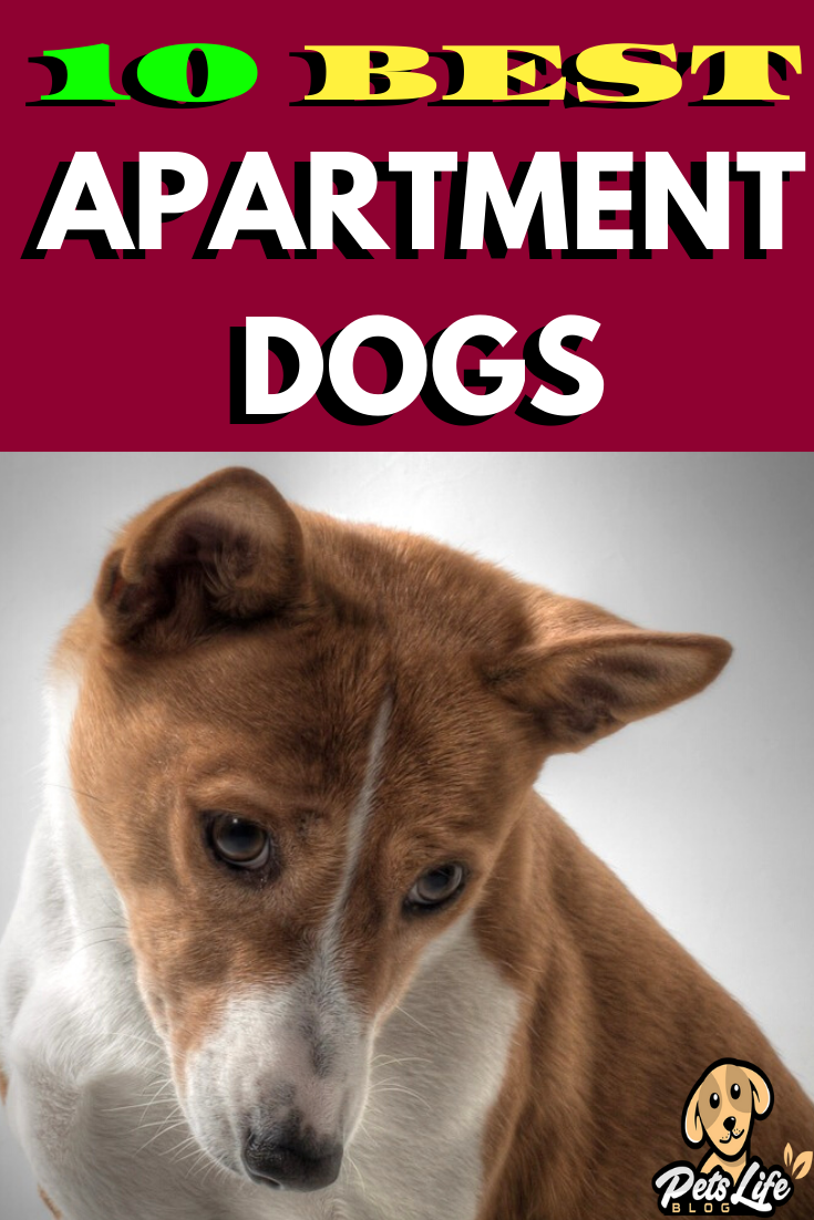 Top 10 Apartment Dogs In 2020 With Images Dogs Apartment Dogs
