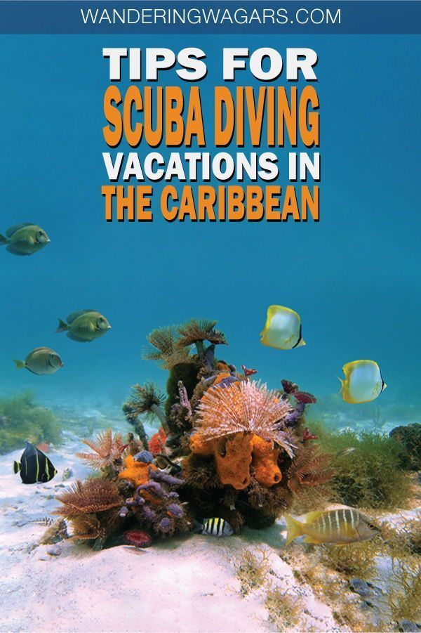 The Best Diving Destinations In The Caribbean For Families