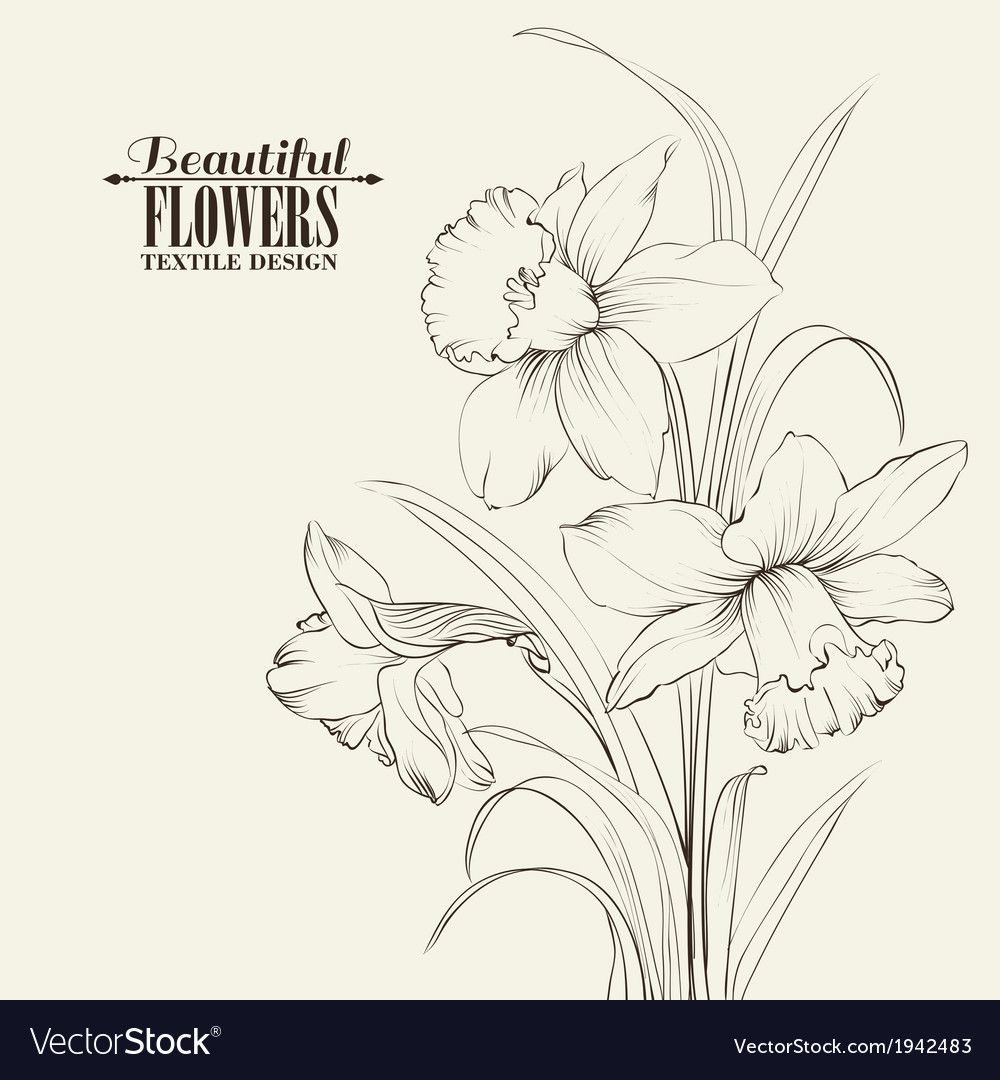 Tied narcissus flowers isolated on white vector image on