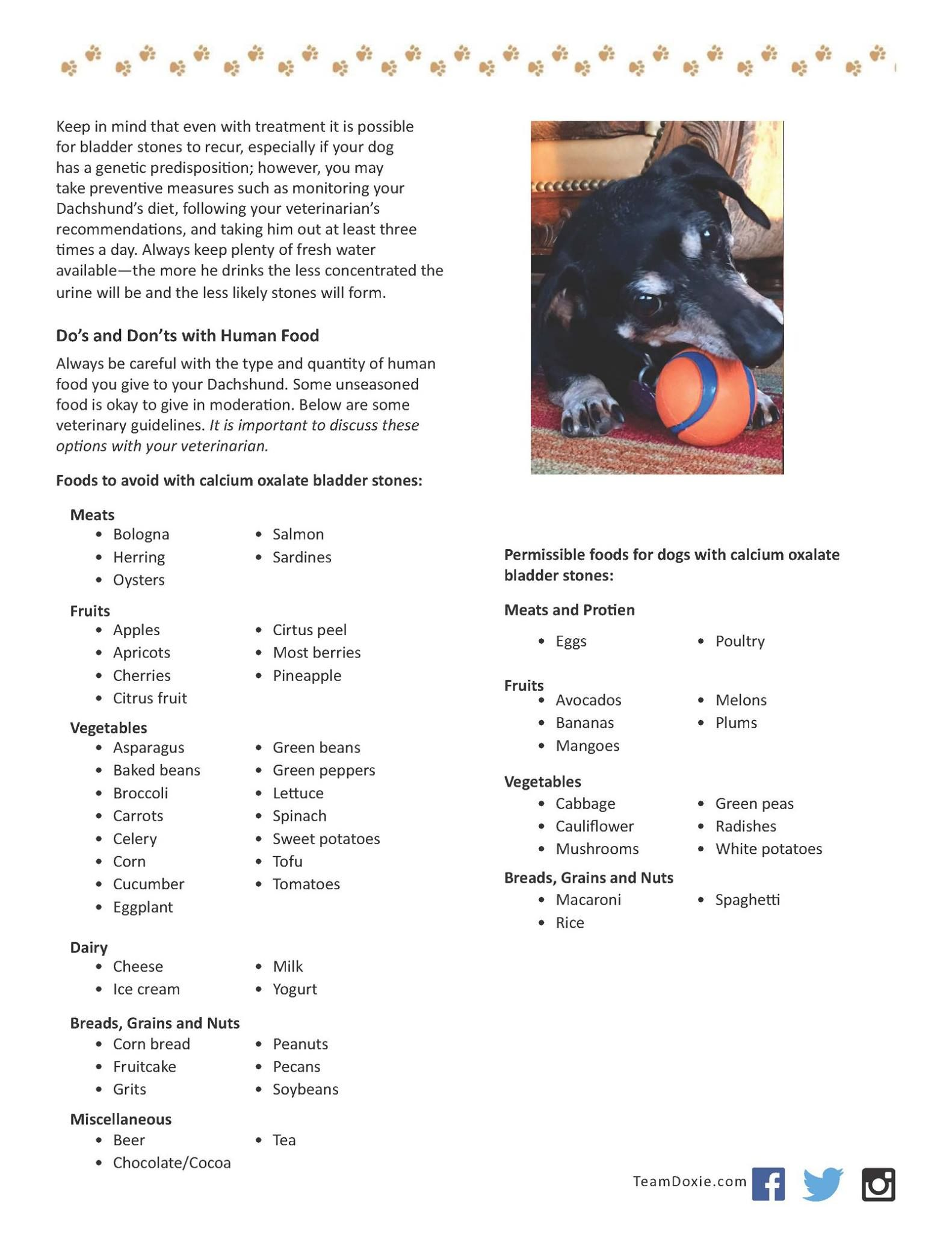 Bladder Stones In Dogs 2 Dog Food Recipes Dogs Pet Accessories