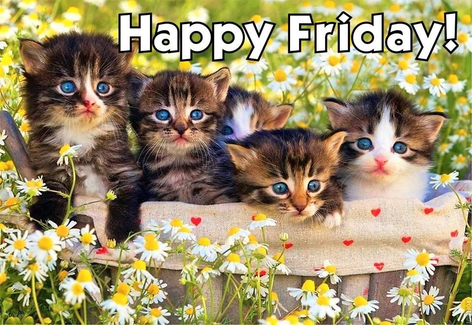 june14 Thursday (With images) Kittens cutest, Kittens