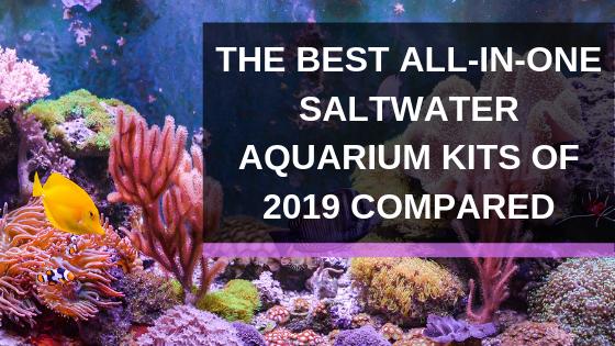 All In One Saltwater Aquarium Kit The 5 Best Starter Packages Of 2019 Aquarium Kit Saltwater Aquarium Aquarium