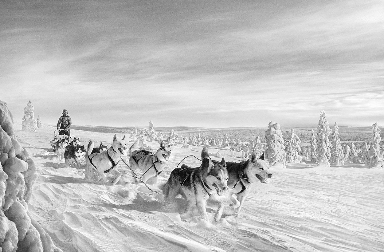 Antti Viitala Shoots For Finlands Tourism Board Antti Viitala - Captivating black and white animal portraits by antti viitala