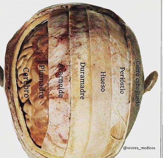 Cerebro | Bodywork | Pinterest | Medicina, Anatomía y Enfermería