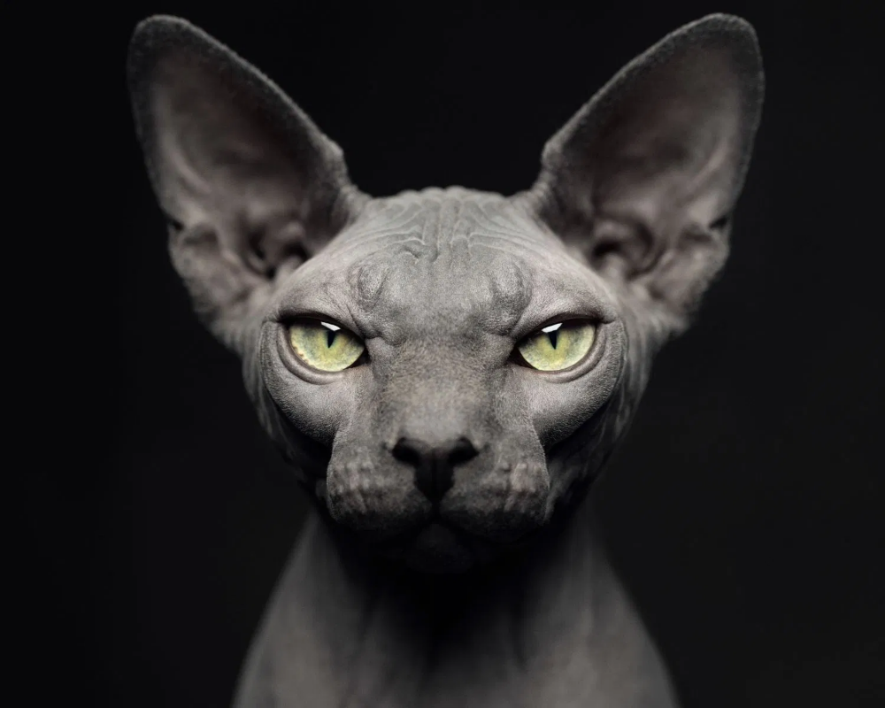 ANIMAL PORTRAITS - Yahoo Search Results Image Search ...