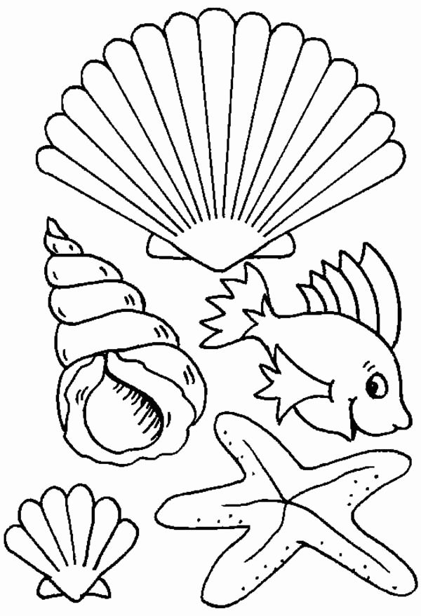Sea Shells Coloring Page New Seashells Coloring Pages Coloring Home Ocean Coloring Pages Online Coloring Pages Coloring Pages