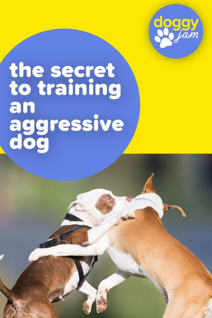 The Secret Of How To Train A Dominant And Aggressive Dog Dogs