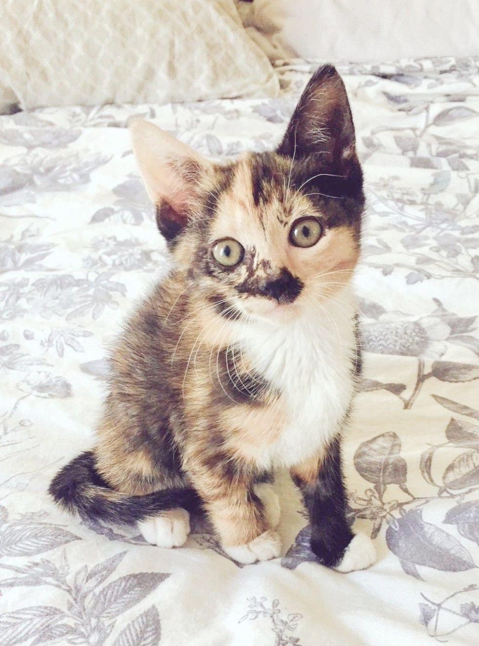 Baby Animals Einstein Puppies Lancaster Pa Kittens Cutest Cute Baby Animals Pretty Cats