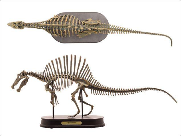1/20 Spinosaurus Skeleton Statue Jurassic Dinosaur Fossil Replica ...