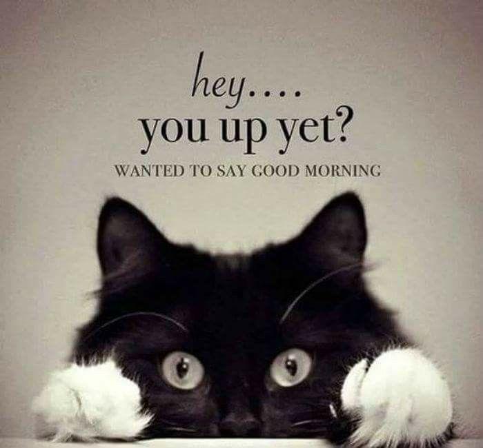 Say Good Morning Lol Funny Good Morning Memes Morning Quotes Funny Funny Good Morning Quotes