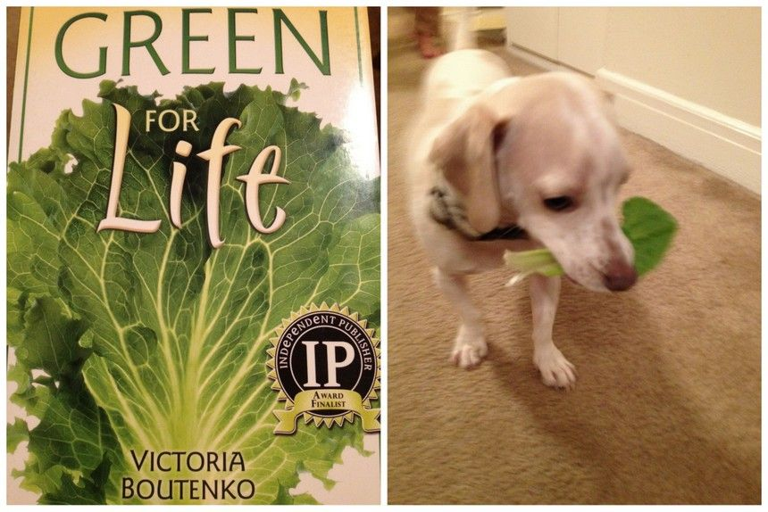 Green Puppy Smoothie Poochie S Gourmet Green Smoothie By