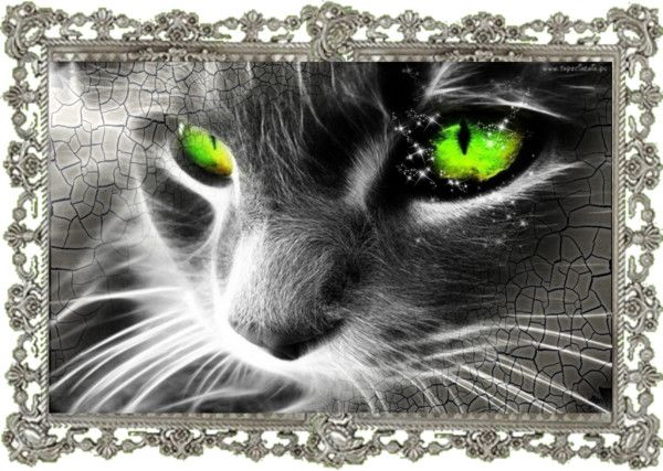 Designer Clothes Shoes Bags For Women Ssense Green Eyed Cat Cat Wallpaper Eyes Wallpaper