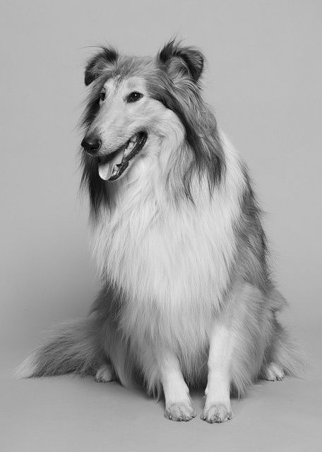 my lovely dog, Mr <3