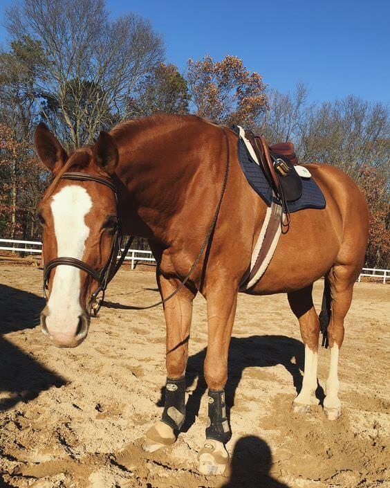 90 Chestnut Horse Names | Chestnut horse, Horses, Horse names