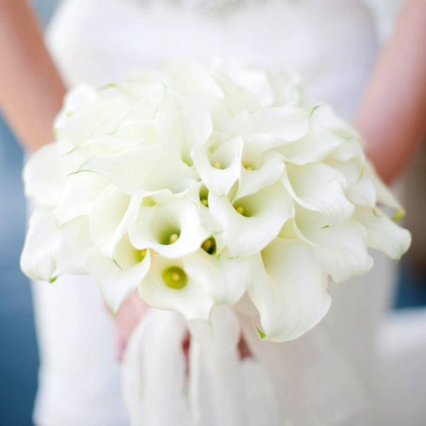 Flower Guide Calla Lilies Calla lilies Wedding and Weddings