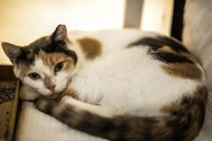 Adopt Fiona On Petfinder Cat Pics Fur Babies Calico Cat