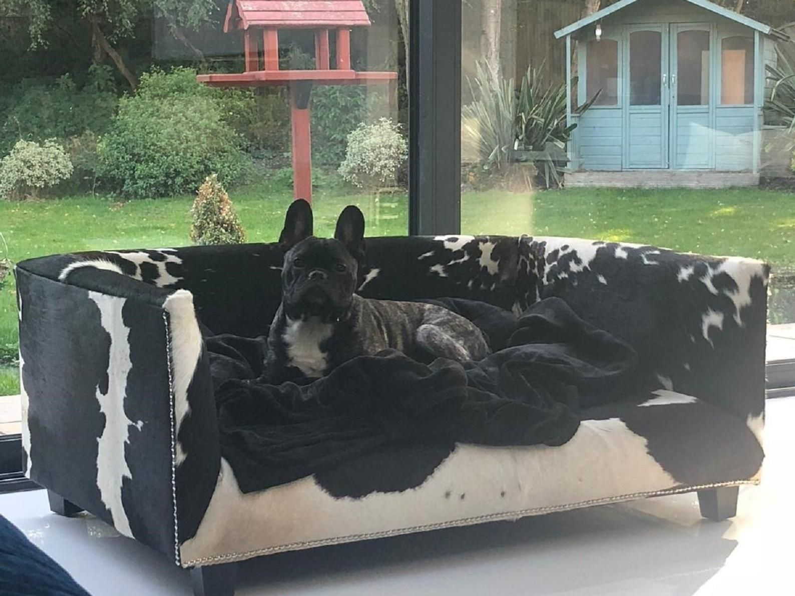 "Extra Large Genuine Cowhide Covered Dog Bed with 4"" Memory"