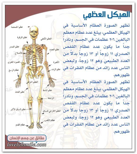 المكونات الرئيسية لجسم الإنسان Arabic Books Health Mindfulness