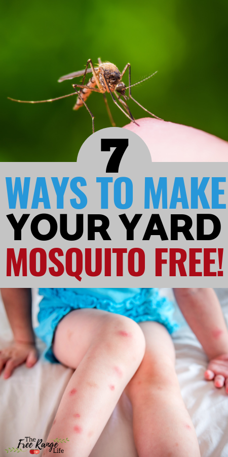7 Methods To Ridding Your Yard Of Mosquitoes Natural Mosquito Repellant Diy Mosquito Repellent Mosquito Repellent Homemade