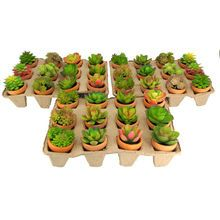 Premade Potted Succulent By Ashland®