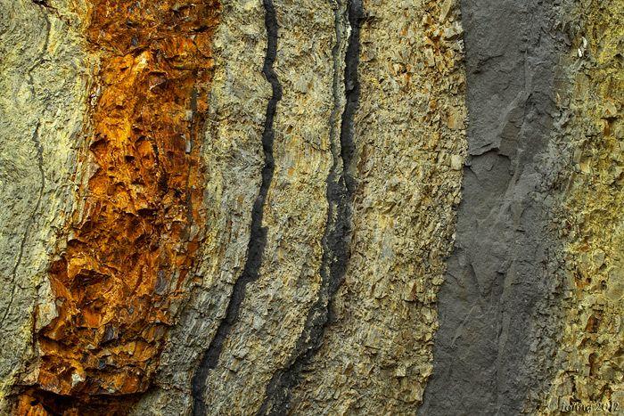 Foto Billede Fra Fur With Images Fur Fossil Meat Jerky