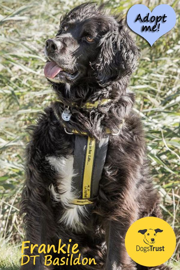 Frankie Is A Worried Boy Who Needs A Very Special Home He Has Lived In A Home Before And Has Lots Of Love To Give Dog Adoption