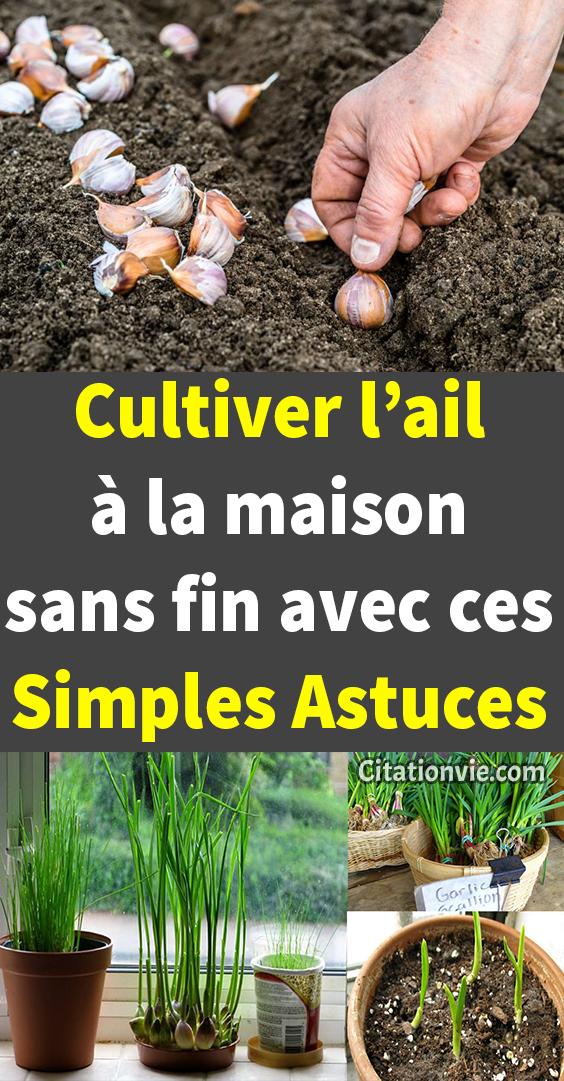 Cultiver L Ail A La Maison Sans Fin Avec Ces Simples Astuces Jardinieres Cultiver Amenager Petit Jardin Jardinage Potager