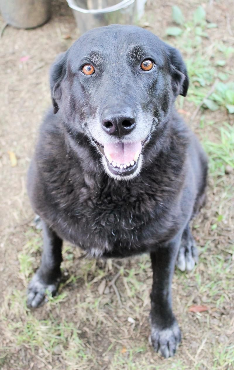 Adopt Ladybug On Rottweiler Puppies Dog Adoption Labrador