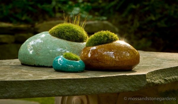 Moss Rocks daffodilmb