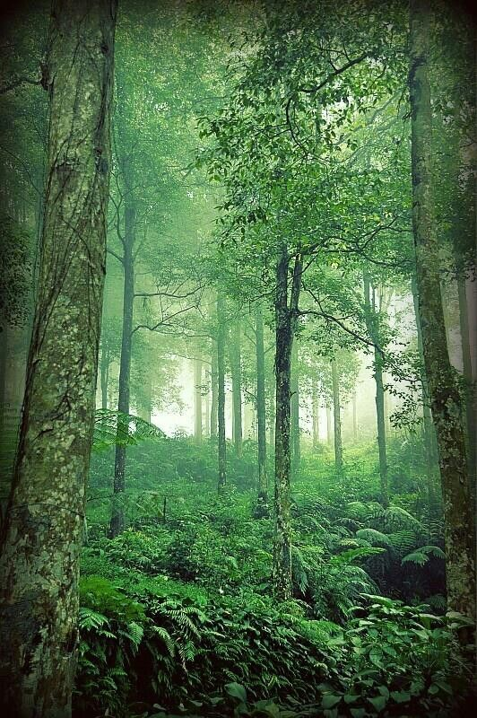 One of tropical forests in Indonesia Nature pictures