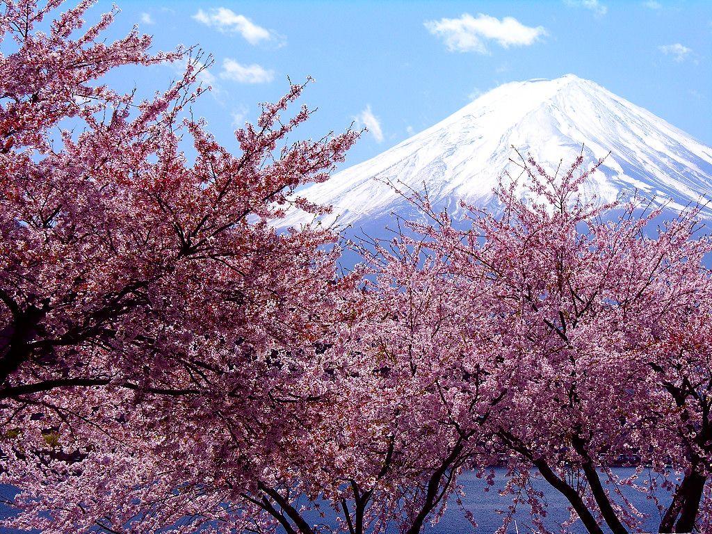 Immagini 桜 Sakura Camera Cafe Cherry Blossom Japan