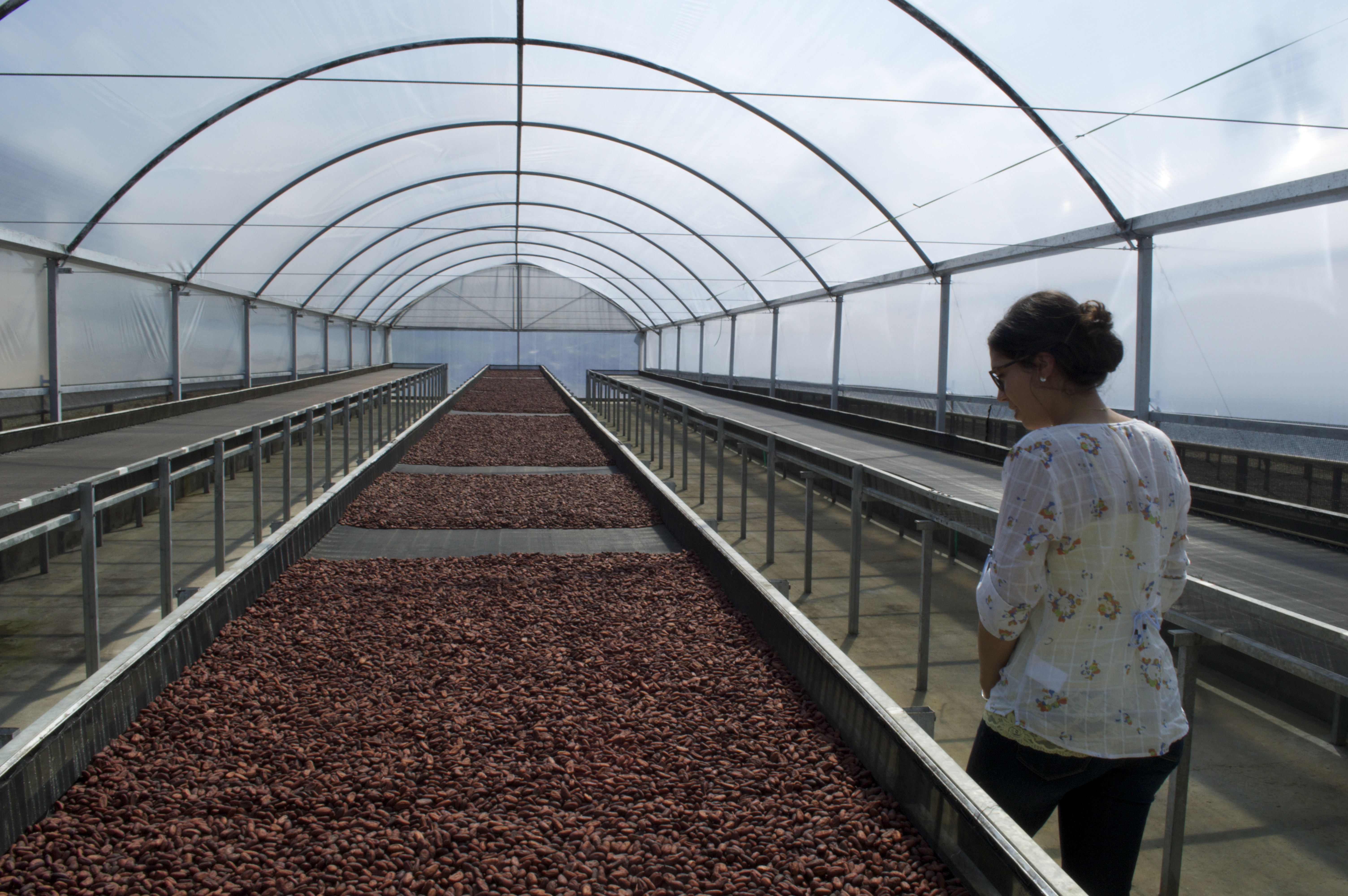 Visiting a cocoa drying facility in Bahia, Brazil. These