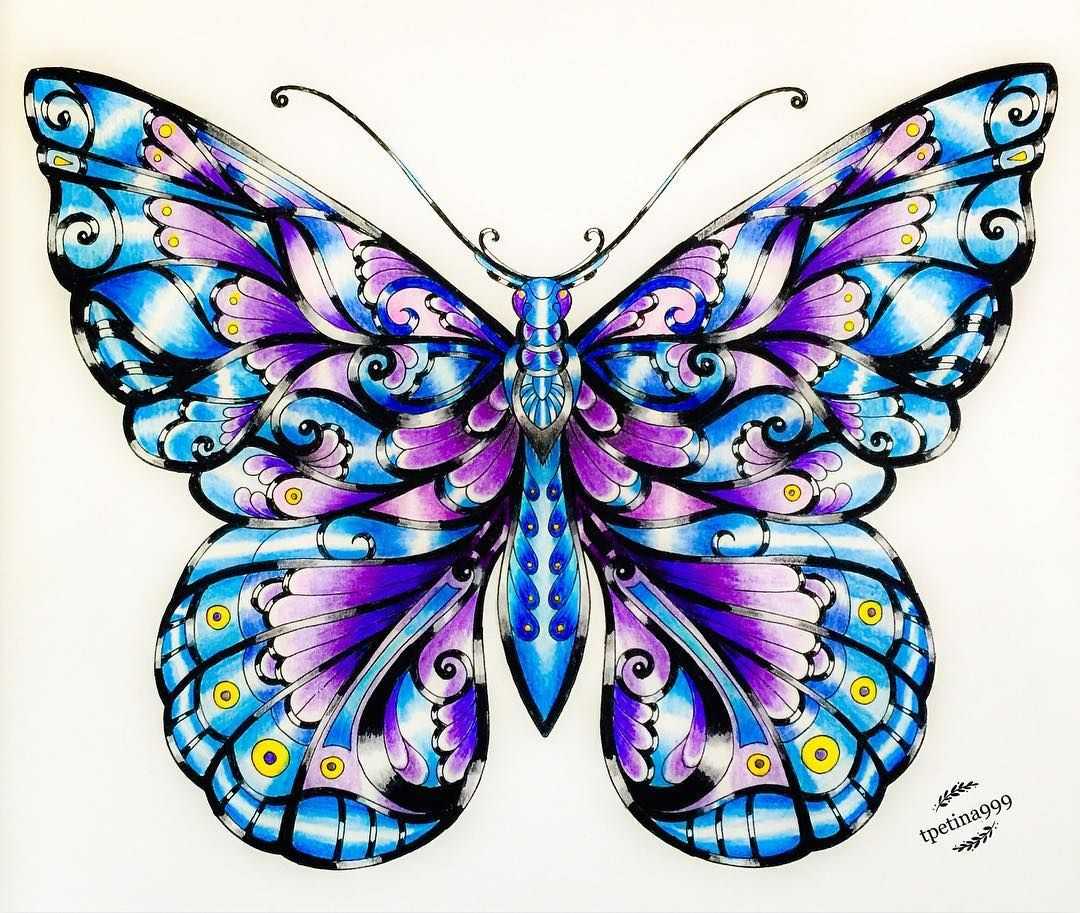 Pin On Magical Jungle Butterflies Pg 10 20 60