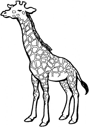 Printable Picture Of Giraffe