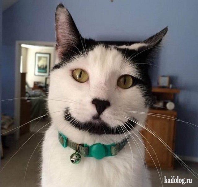 Прикольные котики (45 фото)   Сумасшедшие кошки, Кошки и ...
