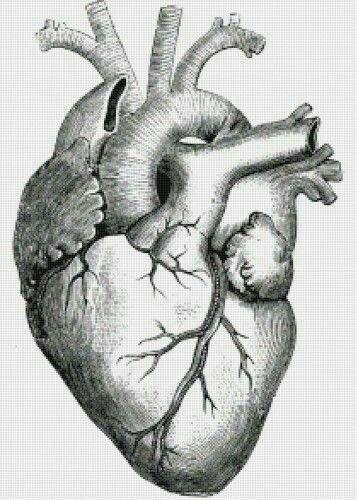 Pin By Mashainiedzwiwedz On Pericardios Pattern Tattoo Human Heart Tattoo Heart Drawing