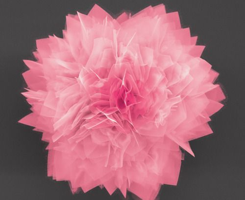 Nanoflowers Promise Energy Storage, Solar Cells - Researchers from North Carolina State Univ. have created flower-like structures out of germanium sulfide (GeS) – a semiconductor material – that have extremely thin petals with an enormous surface area. The GeS flower holds promise for next-generation energy storage devices and solar cells.