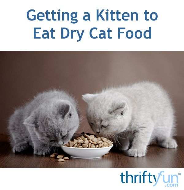 All About Cats Dry Cat Food Cat Diet Raw Cat Food Recipes