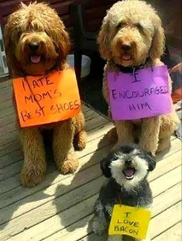 Teamwork. We Has It. is listed (or ranked) 4 on the list 40 of the Most Hilarious Dog Shaming Photos Ever