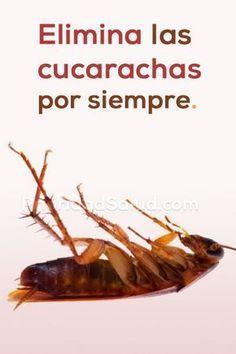 Como Acabar Con La Plaga De Cucarachas Chiquitas Trucos Simples Para Eliminar Las Cucarachas Por Siempre Trucos