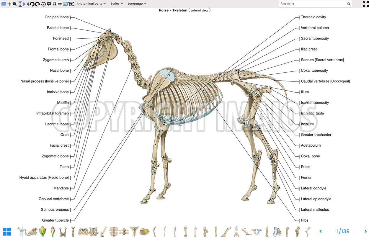 vet-Anatomy: Atlas of equine anatomy: osteology of the horse ...
