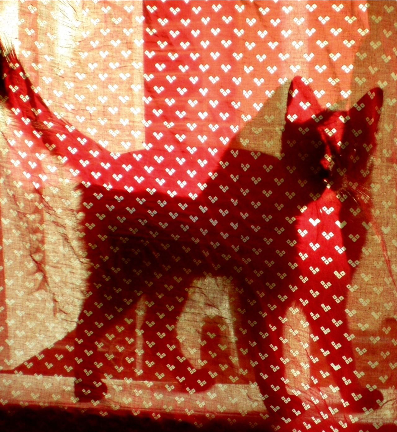 The Shadow Cat ♥