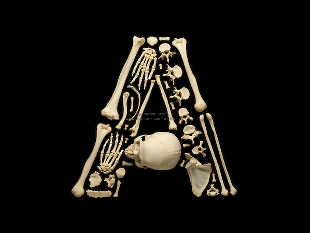 Hermosa Hueso Letras De Canciones Anatomía Festooning - Imágenes de ...